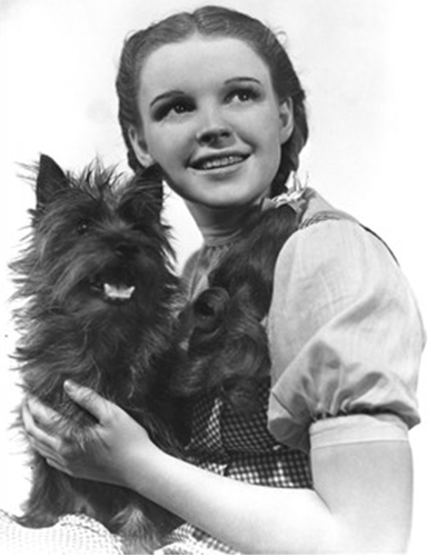 Toto (The Wizard of Oz)